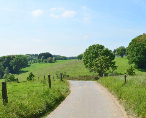 kleine Straße zwischen Weiden und Baeumen